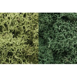 WLS-L167 LIGHT GREEN MIX LICHEN