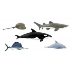 WLS-SP4447 Marine Life