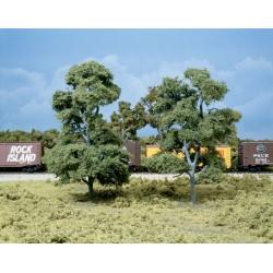 "WLS-TK26 7""-7,5"" BIG OLD TREES 2"