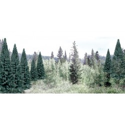 "WLS-TR1587 2""-4"" Ready Made Blue Spruce Value Pack"