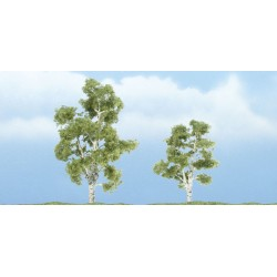WLS-TR1603 PREMIUM TREES SYCAMORE 2