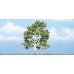 WLS-TR1609 PREMIUM TREES SYCAMORE 1