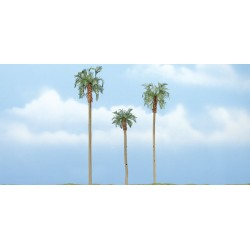 WLS-TR1617 PREMIUM TR. ROYAL PALM 3