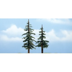 WLS-TR1627 PREMIUM TREES LODGEPOLE 2