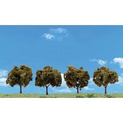 "WLS-TR3592 ORANGE TREES 2""-3"""