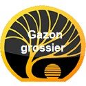 Gazon grossier