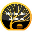 Herbe des champs